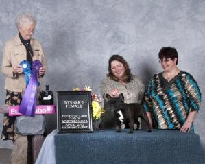 Winners Female : Luna - Owned by Shannon Knezacky and handled by Brenda Anwyll