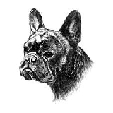 Articles: French Bulldog Club of Western Canada